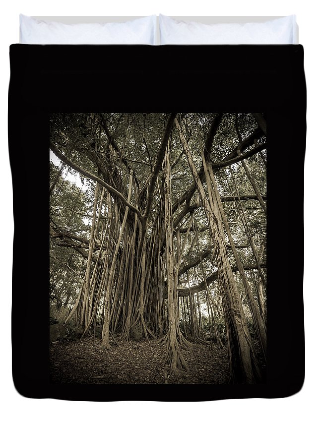 3scape Duvet Cover featuring the photograph Old Banyan Tree by Adam Romanowicz