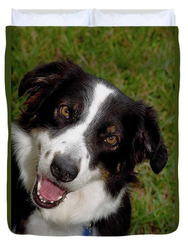 Dog Duvet Cover featuring the photograph Old Faithful by Diane Macdonald
