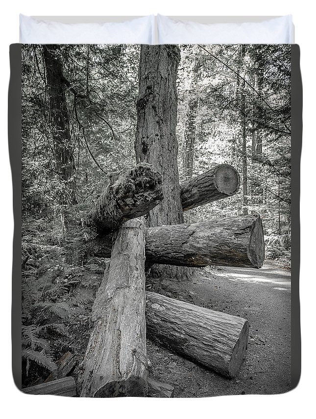 Old Growth Forest Duvet Cover featuring the photograph Old Growth Forest Black And White Collection 4 by Roxy Hurtubise