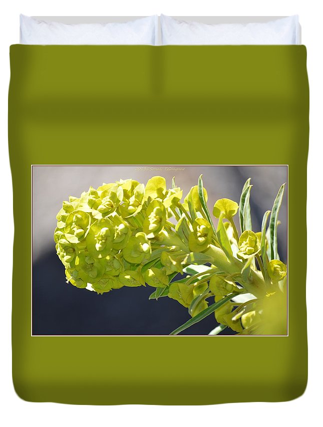 Olive Florescence Duvet Cover featuring the photograph Olive Fluorescence by Sonali Gangane