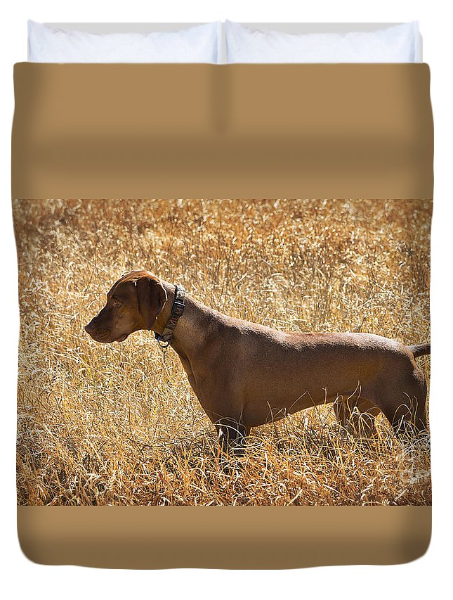 Dog Duvet Cover featuring the photograph On Point by Dianne Phelps