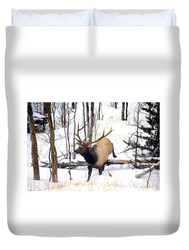 Elk Duvet Cover featuring the photograph On the Move by Mike Dawson