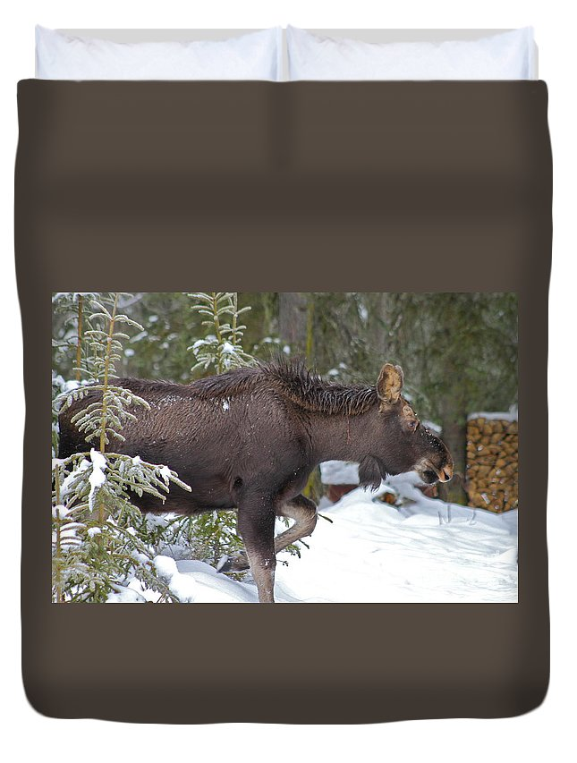 Moose Duvet Cover featuring the photograph On The Move by Rick Monyahan