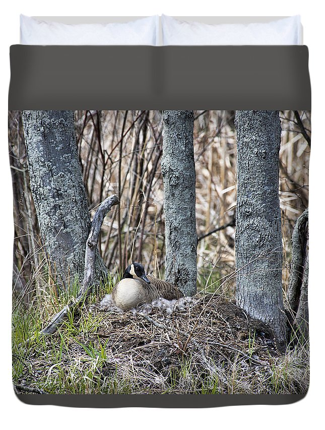 Goose Duvet Cover featuring the photograph On The Nest by David Arment