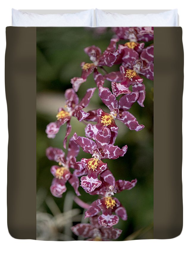 Orchid Duvet Cover featuring the photograph Oncidium by Terri Winkler