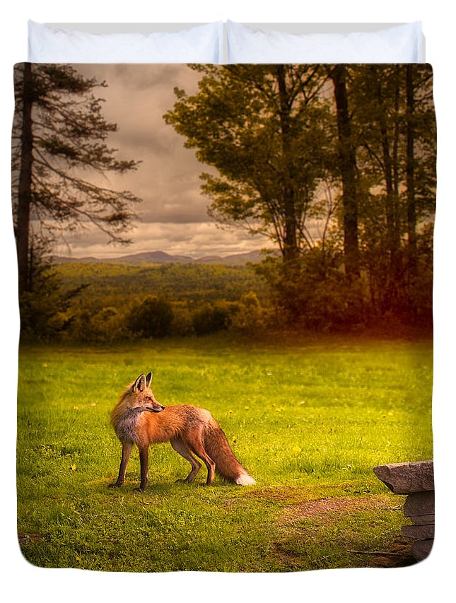 Fox Duvet Cover featuring the photograph One Red Fox by Bob Orsillo