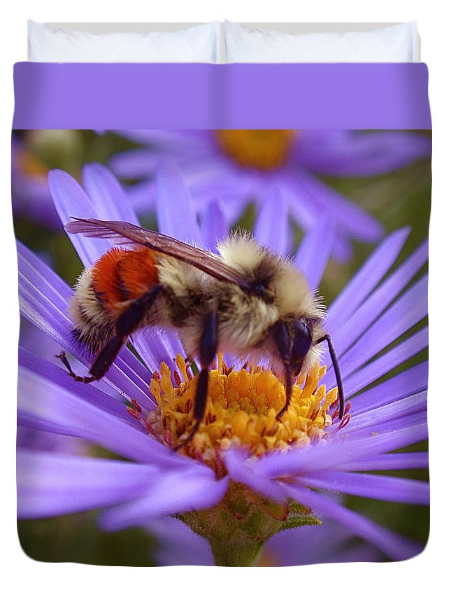 Bees Duvet Cover featuring the photograph Orange-banded Bee by Rona Black