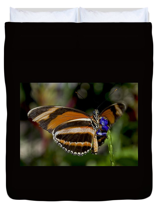 Orange Butterfly Duvet Cover featuring the photograph Orange Banded Butterfly by Heather Applegate