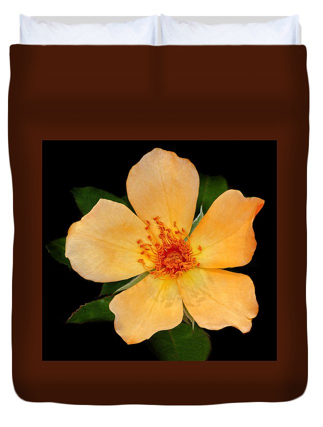 Orange Duvet Cover featuring the photograph Orange Blossom by Dave Mills