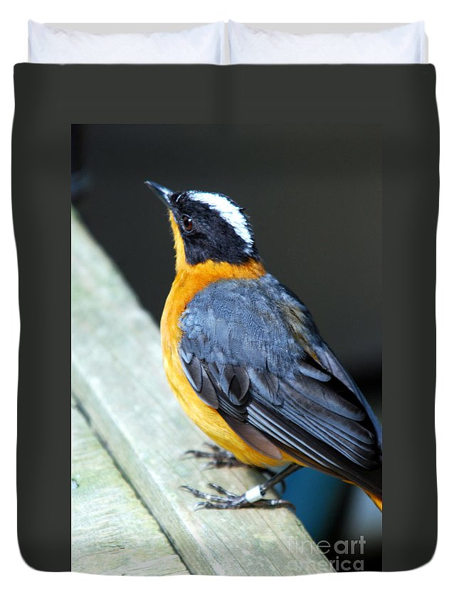 Bird Duvet Cover featuring the photograph Orange Breasted Bird Portrait by Optical Playground By MP Ray