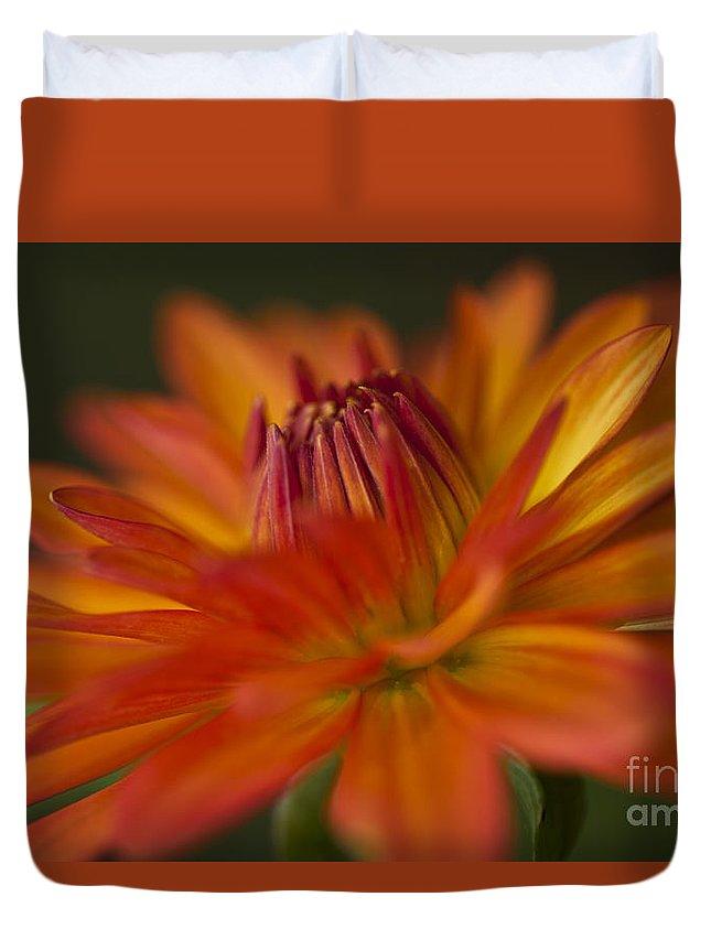 Heiko Duvet Cover featuring the photograph Orange Dahlia by Heiko Koehrer-Wagner