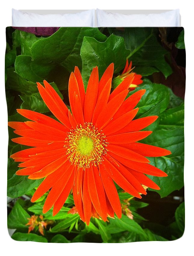 Daisies Duvet Cover featuring the photograph Orange Gerbera Daisy by Marian Palucci-Lonzetta