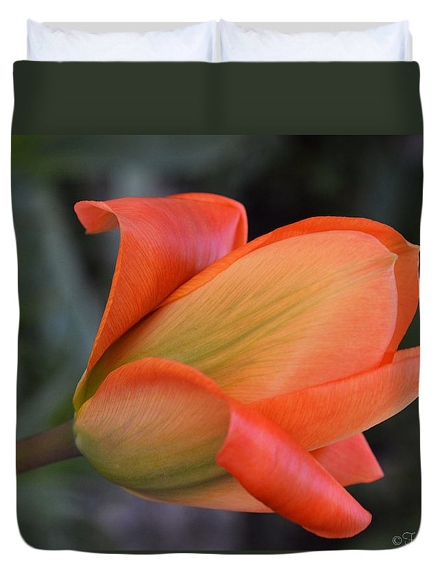 Tulip Duvet Cover featuring the photograph Orange Lady by Felicia Tica