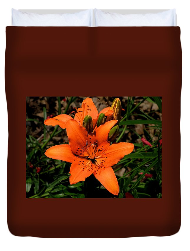 Orange Duvet Cover featuring the photograph Orange Lily by C H Apperson