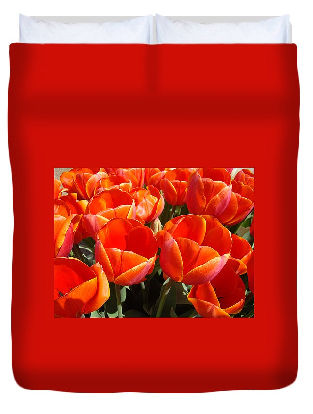 Orange Duvet Cover featuring the photograph Orange Spring Tulip Flowers Art Prints by Baslee Troutman