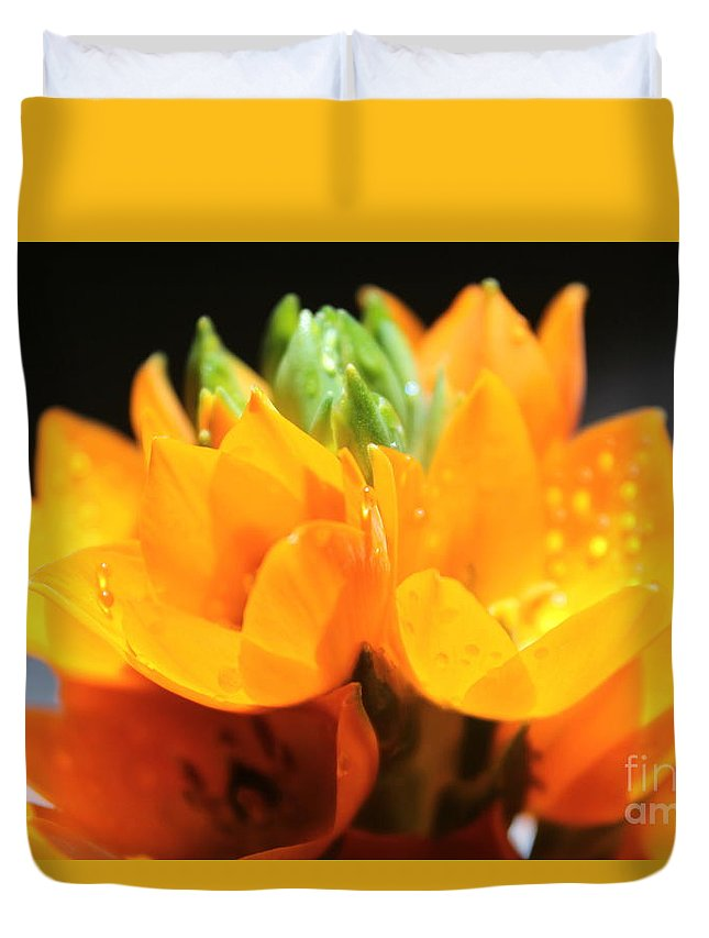 Orange Star Flower Duvet Cover featuring the photograph Orange Star by Krissy Katsimbras