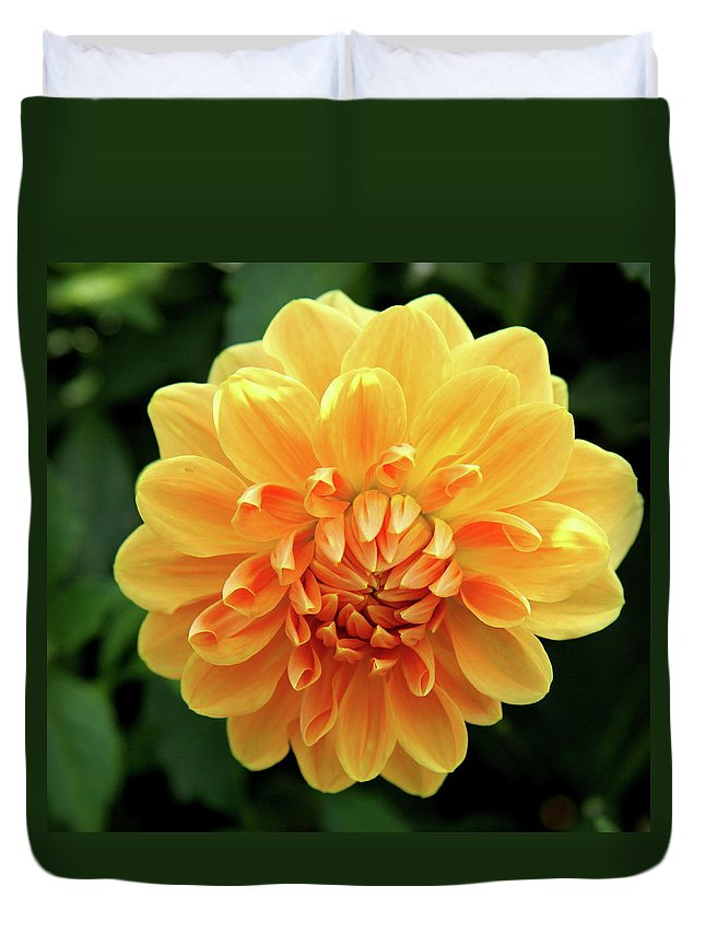 Dahlia Duvet Cover featuring the photograph Orange Sun by Christiane Schulze Art And Photography