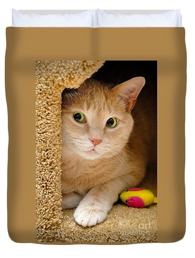 Alert Duvet Cover featuring the photograph Orange Tabby Cat In Cat Condo by Amy Cicconi