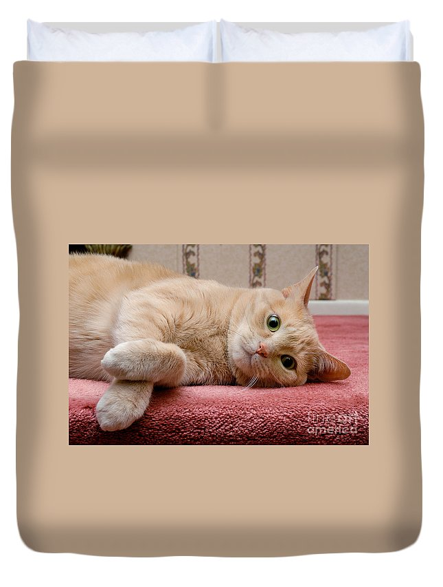Alert Duvet Cover featuring the photograph Orange Tabby Cat Lying Down by Amy Cicconi