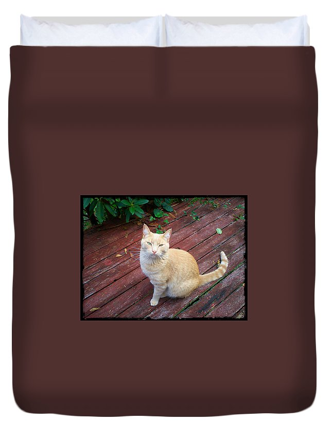 Cat Duvet Cover featuring the photograph Orange Tabby On Porch by Absinthe Art By Michelle LeAnn Scott