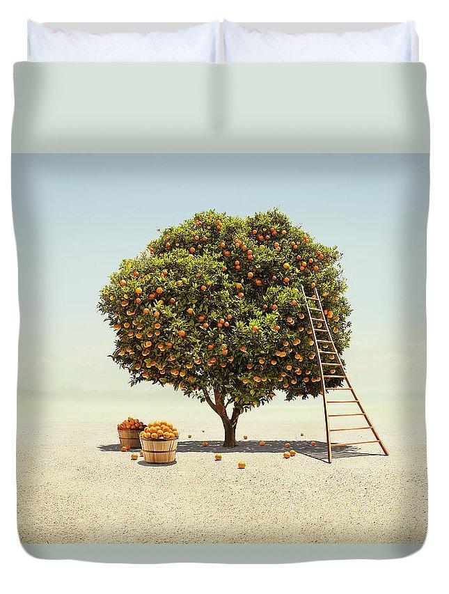 Bucket Duvet Cover featuring the photograph Orange Tree Harvest In Barren Desert by Stephen Swintek