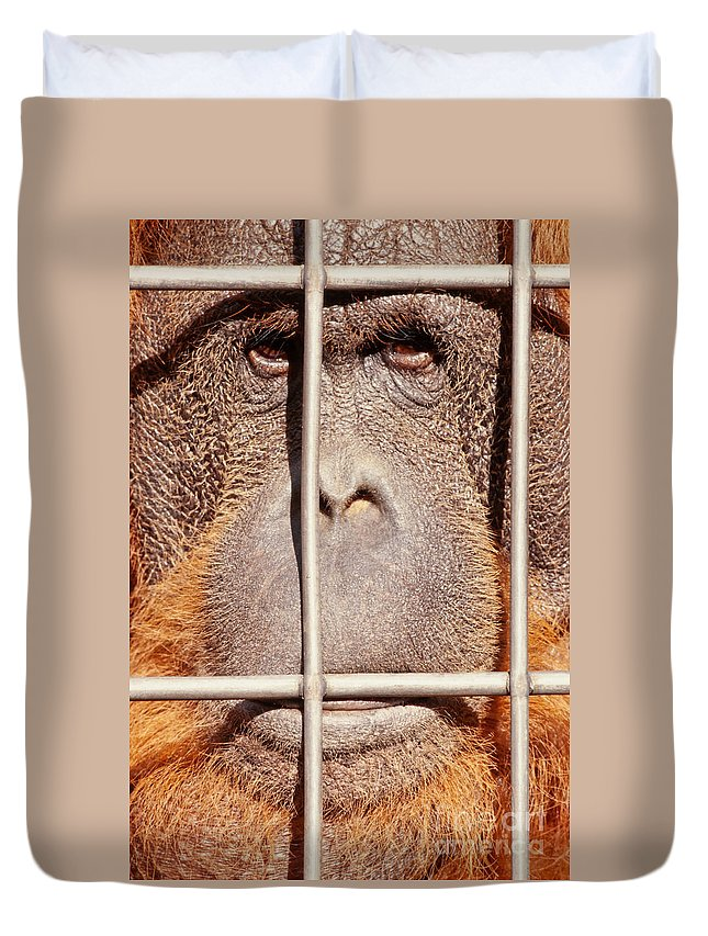 Adult Duvet Cover featuring the photograph Orangutan Face Watching From Behind Steel Bars by Stephan Pietzko