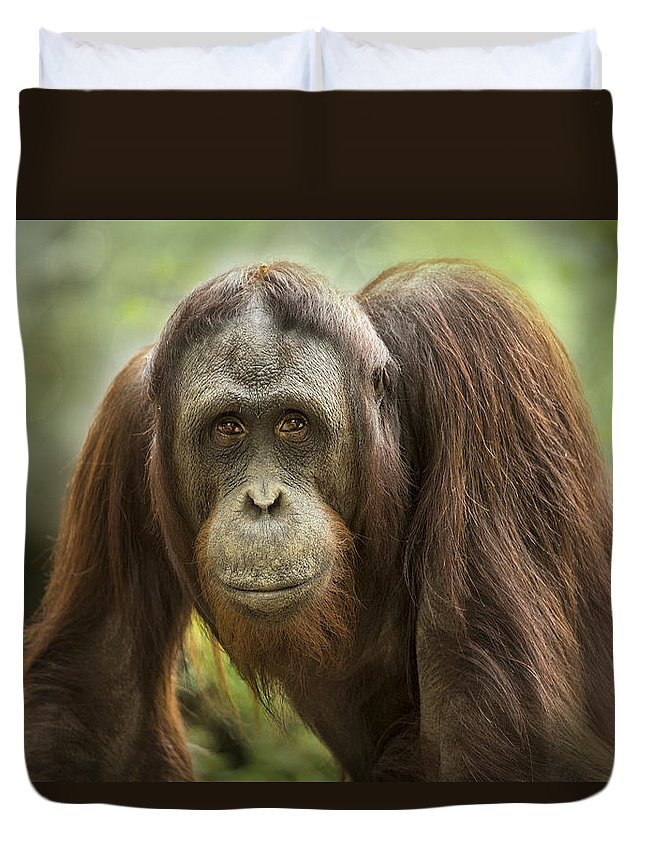Malaysia Duvet Cover featuring the photograph Orangutan by Linda D Lester