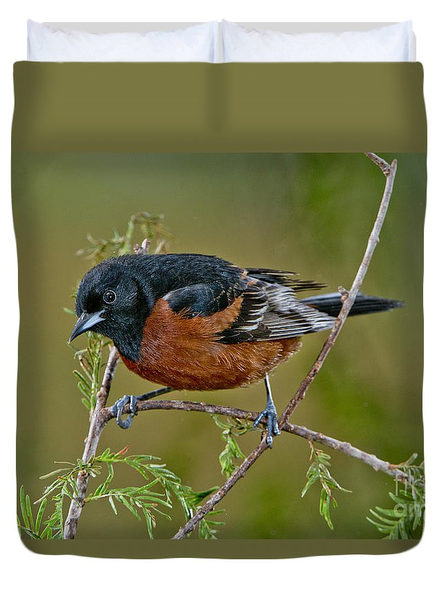 Orchard Oriole Duvet Cover featuring the photograph Orchard Oriole by Anthony Mercieca