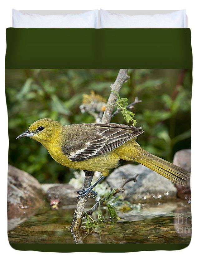 Orchard Oriole Duvet Cover featuring the photograph Orchard Oriole Female by Anthony Mercieca