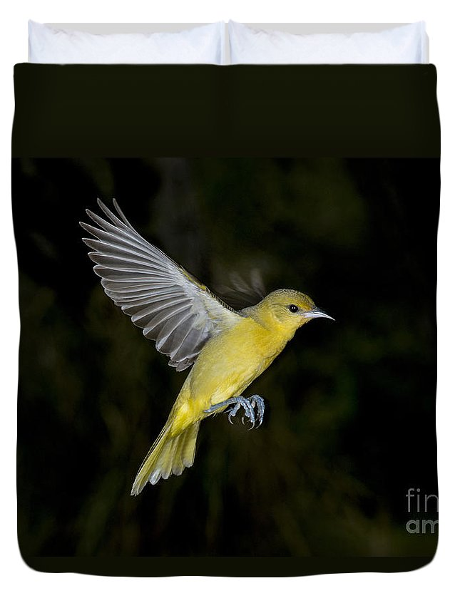 Orchard Oriole Duvet Cover featuring the photograph Orchard Oriole Hen by Anthony Mercieca
