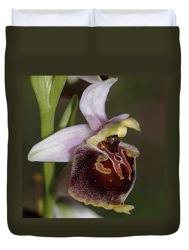 Orchid Duvet Cover featuring the photograph Orchid 29 by Ingrid Smith-Johnsen