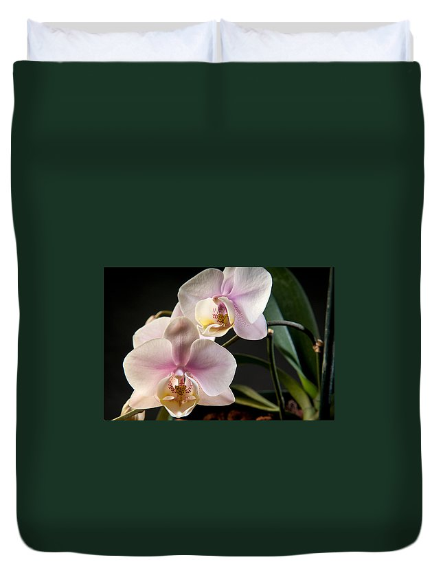 Orchids Duvet Cover featuring the photograph Orchid In Bloom by Carla White