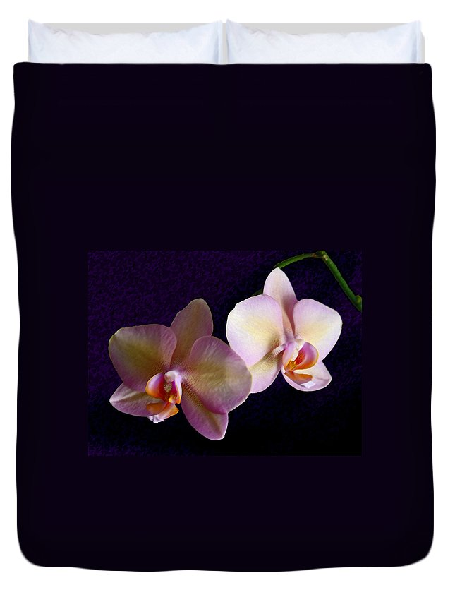 Orchid Duvet Cover featuring the photograph Orchid Light by Steve Karol