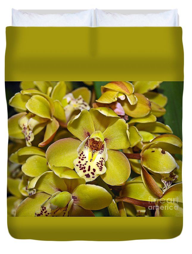 Orchid Flowers Duvet Cover featuring the photograph Orchids by Howard Stapleton