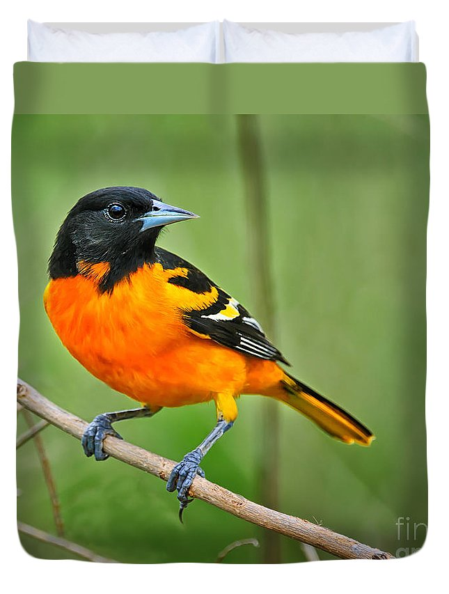 Oriole Duvet Cover featuring the photograph Oriole Perched by Timothy Flanigan