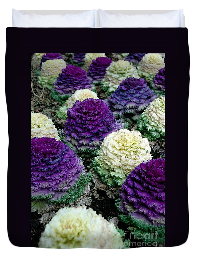 Brassica Oleracea Duvet Cover featuring the photograph Ornamental Cabbage by Amy Cicconi