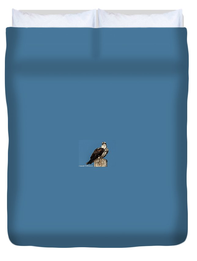 Osprey Duvet Cover featuring the photograph Osprey by Brian Williamson