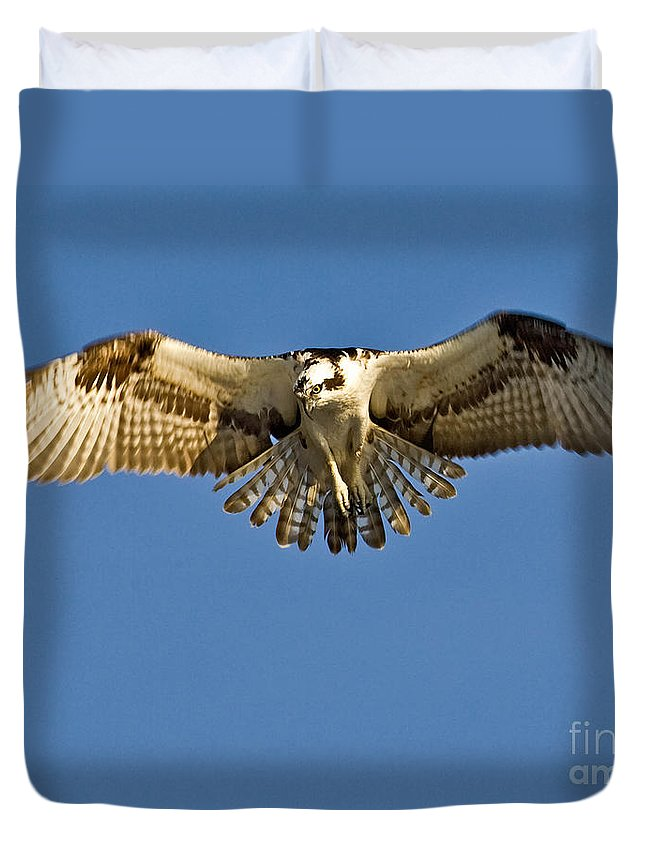 Osprey Duvet Cover featuring the photograph Osprey Hovering by Jerry Fornarotto