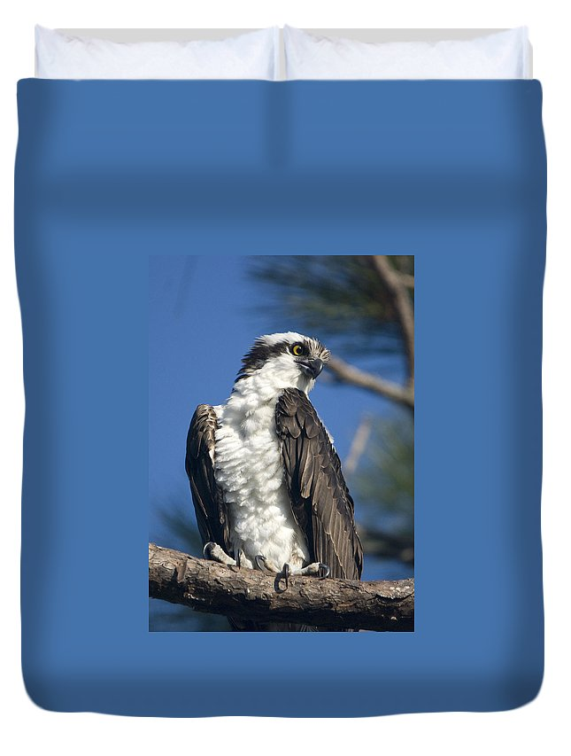 Osprey Duvet Cover featuring the photograph Osprey by John Greco