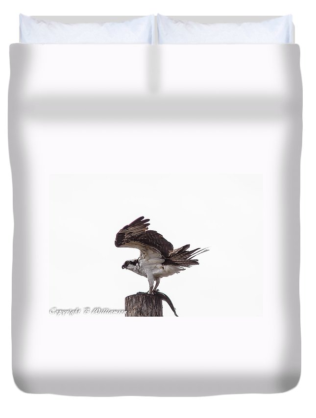 Osprey Duvet Cover featuring the photograph Osprey Wit A Trout by Brian Williamson