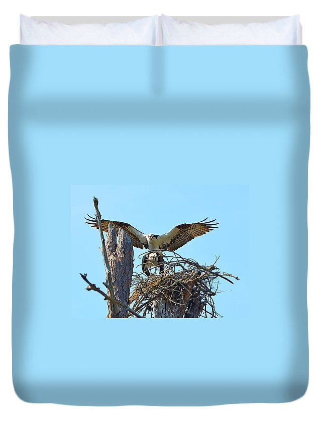 Ospreys Duvet Cover featuring the photograph Ospreys Copulating In New Nest3 by Jeff at JSJ Photography