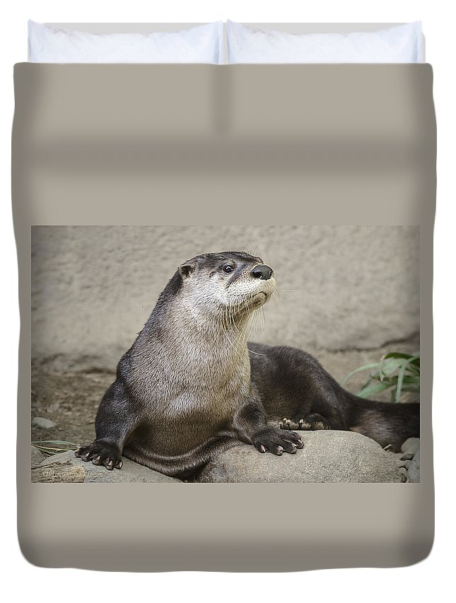 North American Duvet Cover featuring the photograph Otter North American by LeeAnn McLaneGoetz McLaneGoetzStudioLLCcom