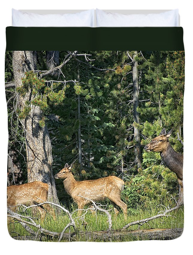 Elk Duvet Cover featuring the photograph Out For A Walk by Claudia Kuhn
