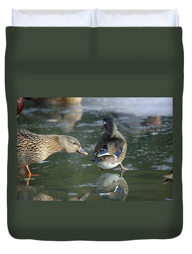 Ducks Duvet Cover featuring the photograph Out Of My Roosting Ice Spot Shorty by Jeff Swan