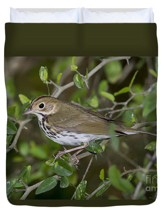 Ovenbird Duvet Cover featuring the photograph Ovenbird by Anthony Mercieca