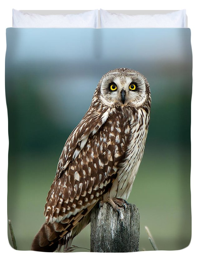 Short Eared Owl Duvet Cover featuring the photograph Owl See You by Torbjorn Swenelius