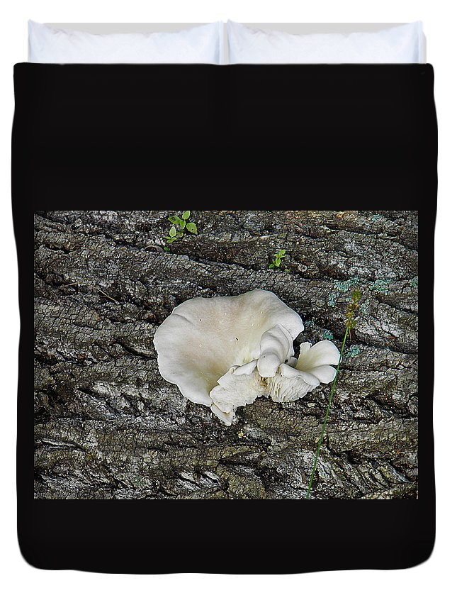 Oyster Duvet Cover featuring the photograph Oyster Mushroom by Nick Kirby