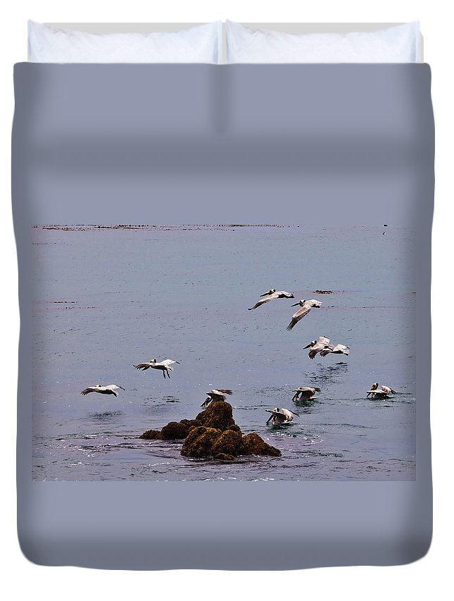 Bird Duvet Cover featuring the photograph Pacific Landing by Melinda Ledsome