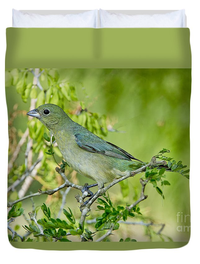 Painted Bunting Duvet Cover featuring the photograph Painted Bunting Hen by Anthony Mercieca