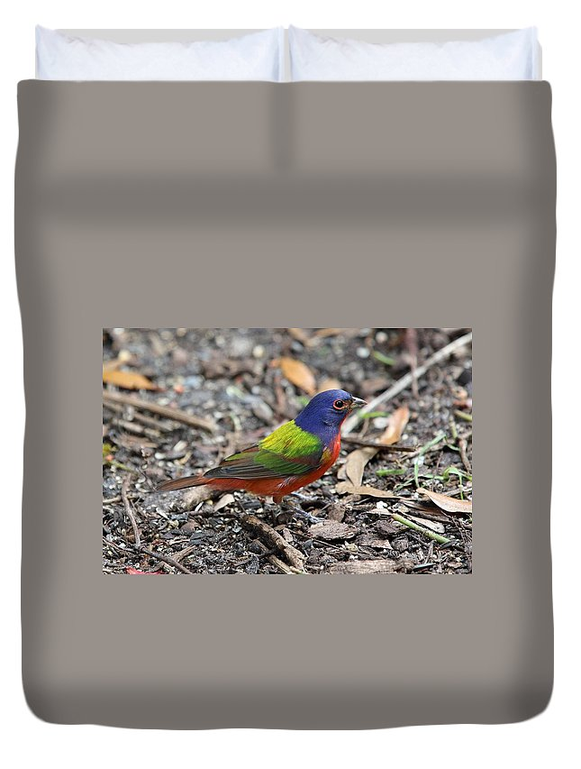 Songbird Duvet Cover featuring the photograph Painted Bunting by Paul Golder